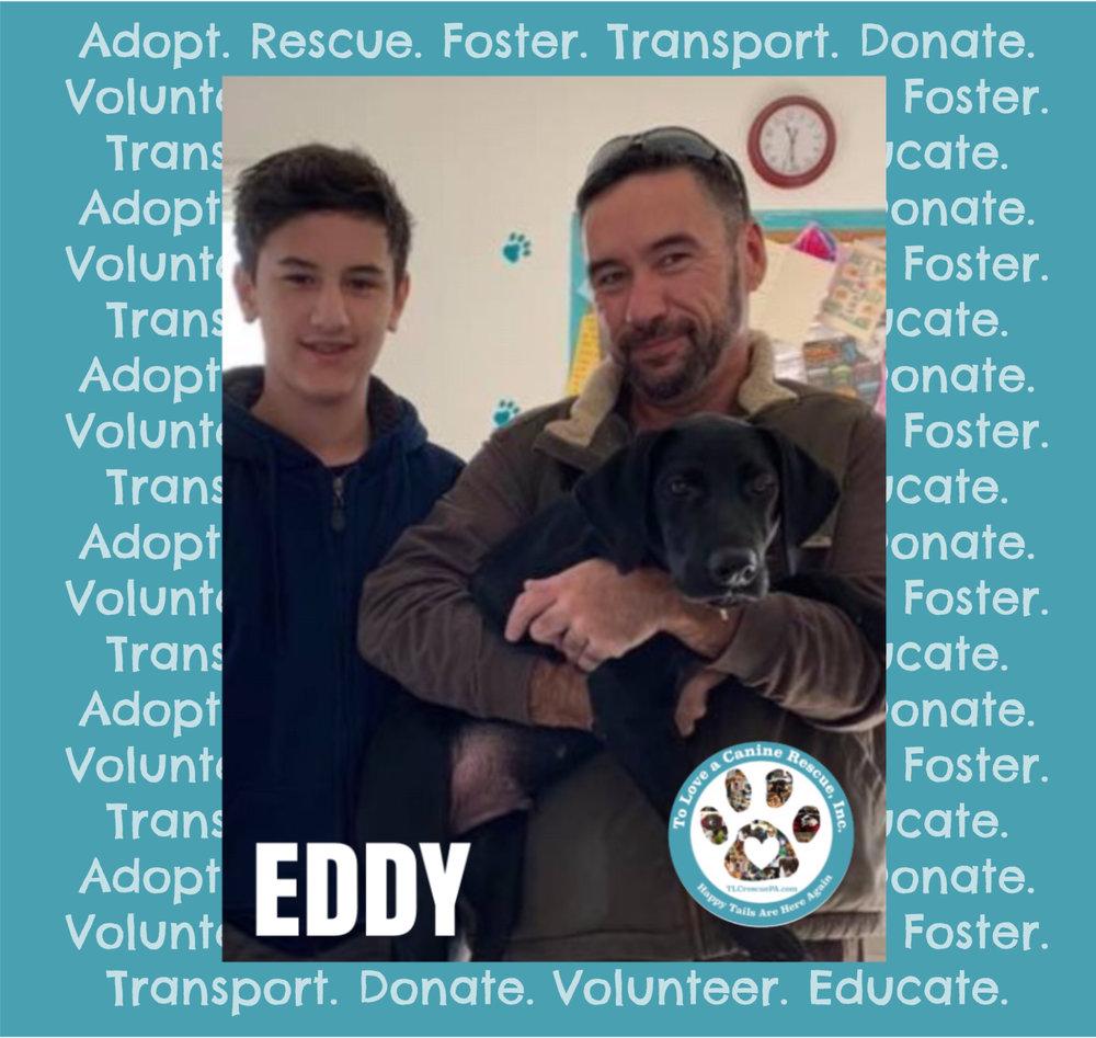 EDDY.PNG