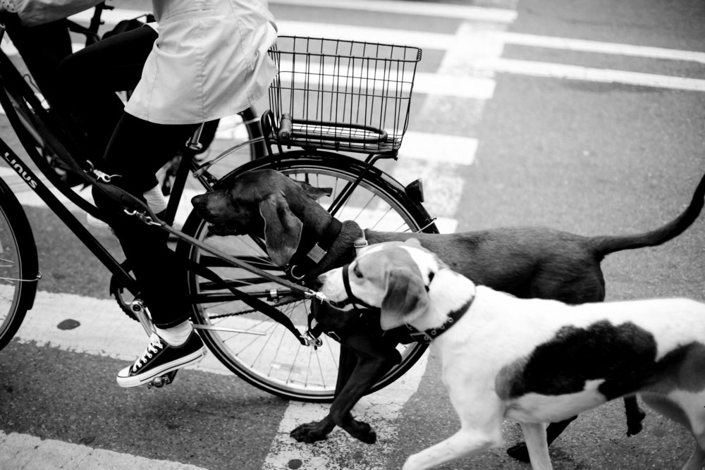 biking with pups_BW.jpg