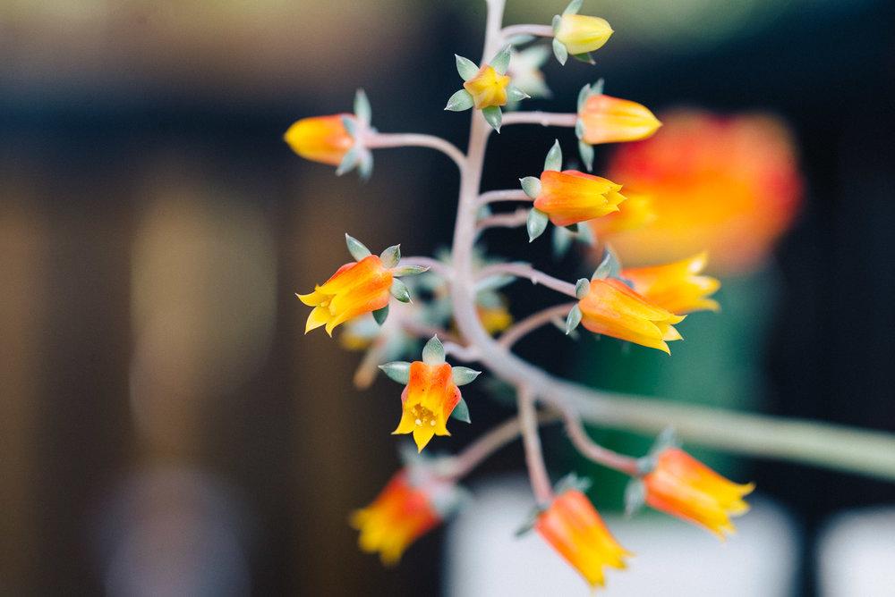 Jen-Plants-9946.jpg