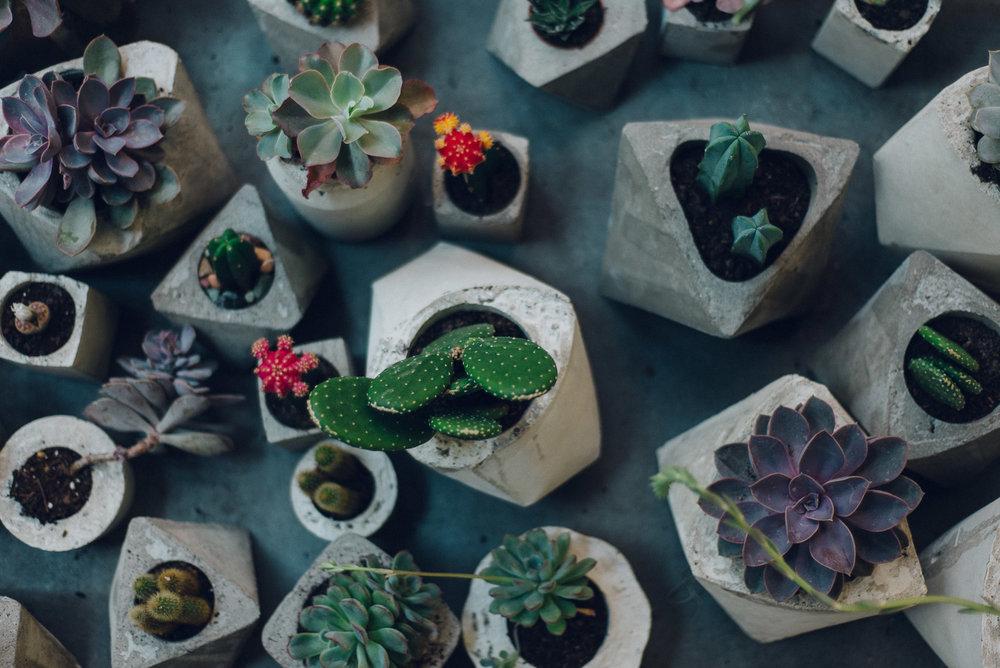 Jen-Plants-9956.jpg