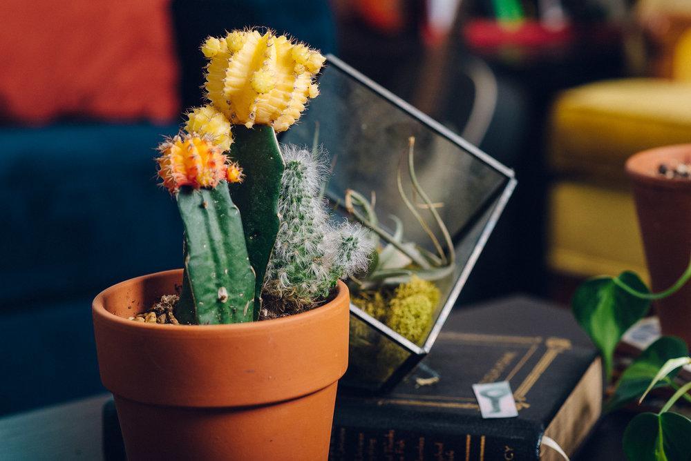 Jen-Plants-9975.jpg