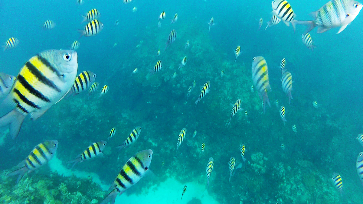 Fish on Reef in Montego Bay