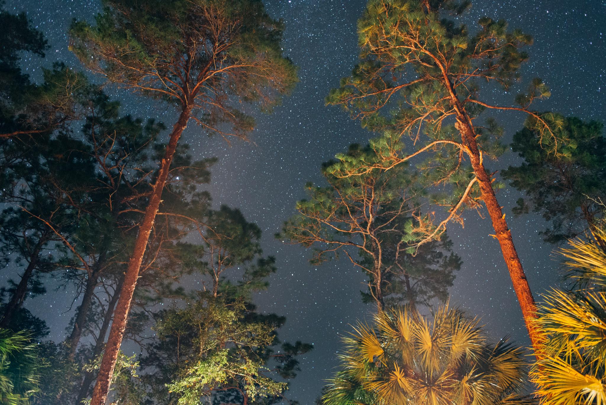 Alexander Springs at Night