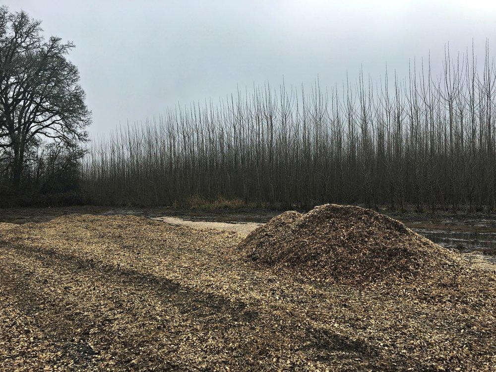 poplar-field-2.jpg