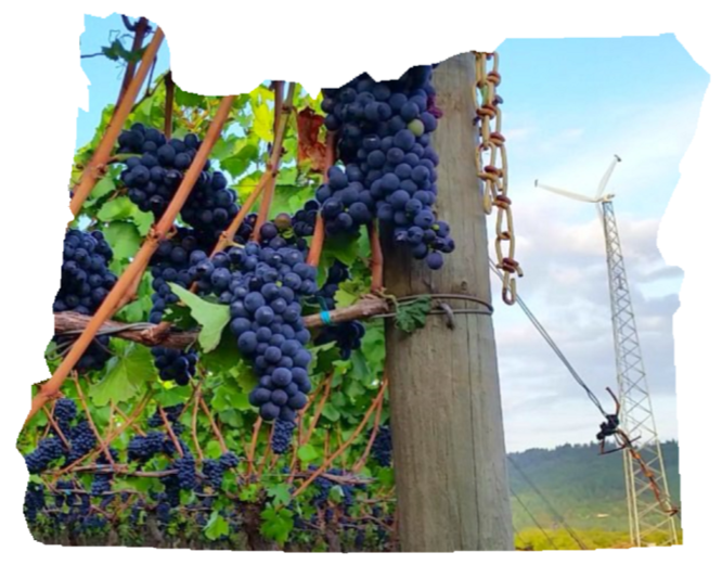 oregon-grapes-wind.png