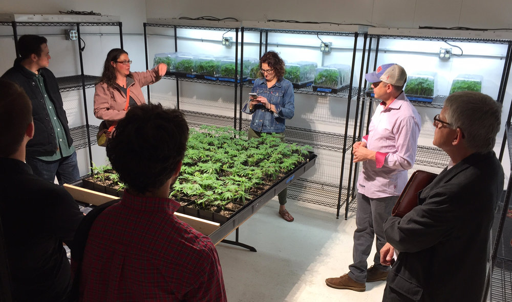 We visited an indoor cannabis growing facility near  Canby , which has several energy efficient features.