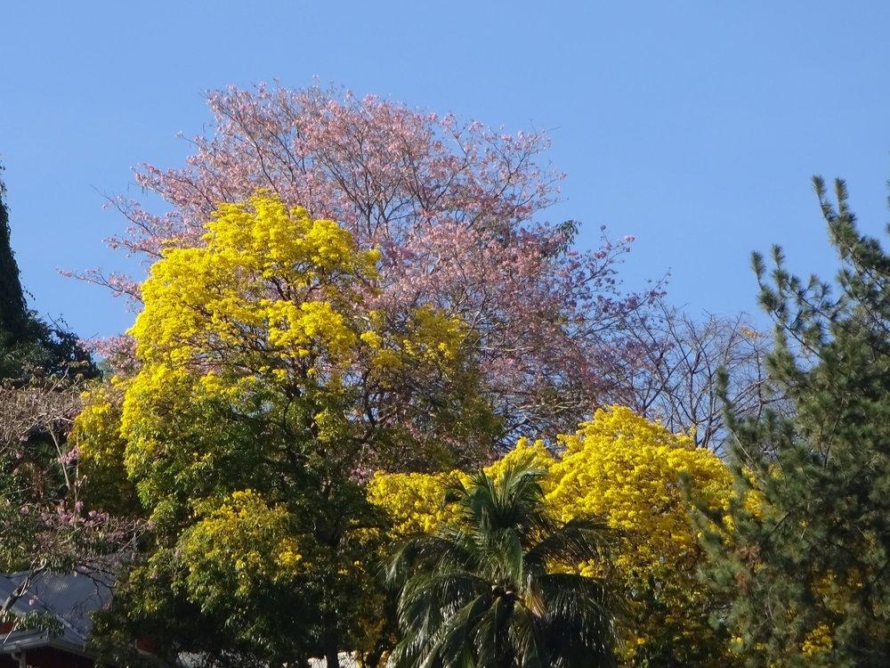 Poui-tree