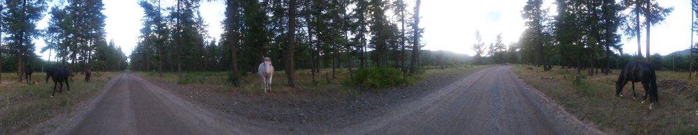 The free roaming horses at Cholla Hills. -