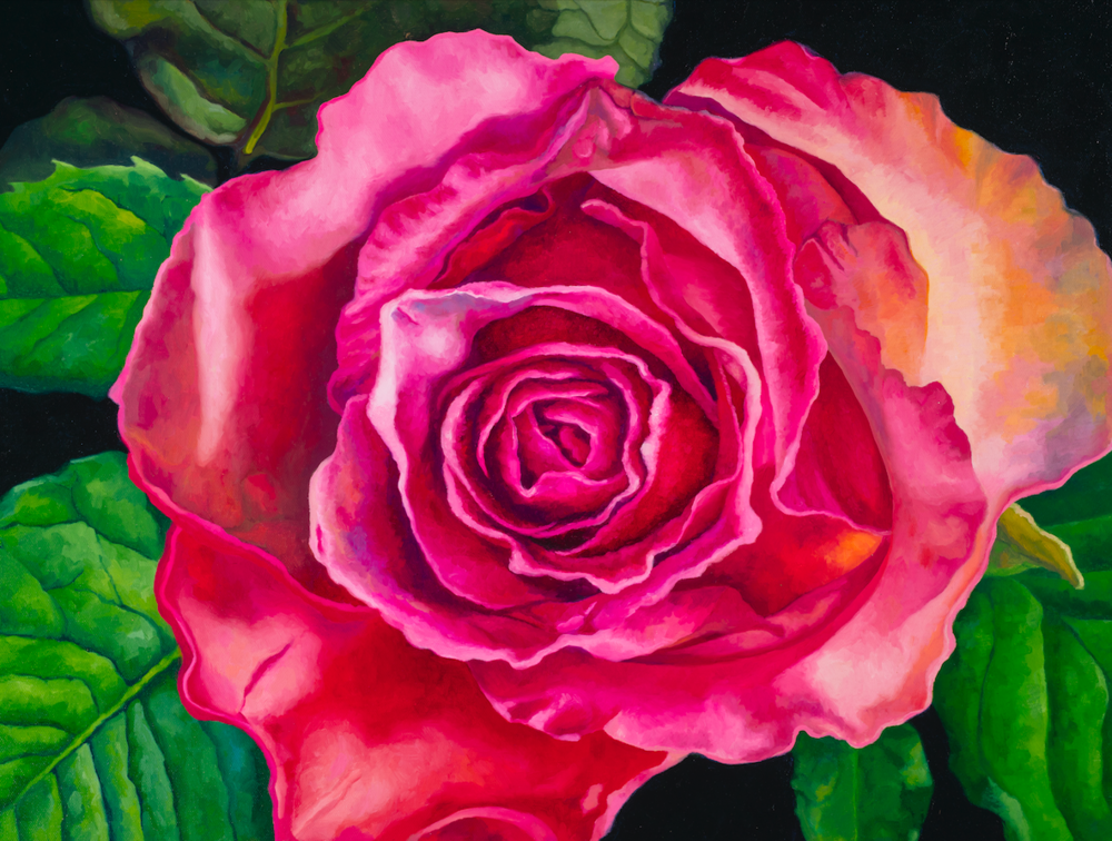 "Rose #2  Oil on wrapped canvas 18"" h x 24"" w x 1.5"" d  *Framed in Aluminum Floating Frame"