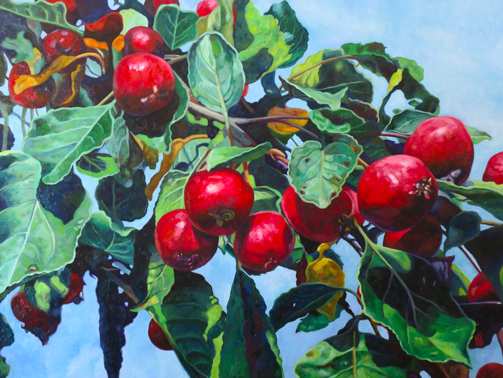 "Crab Apples VI  Oil on wrapped canvas  30"" h x 40"" w x 1.5"" d"