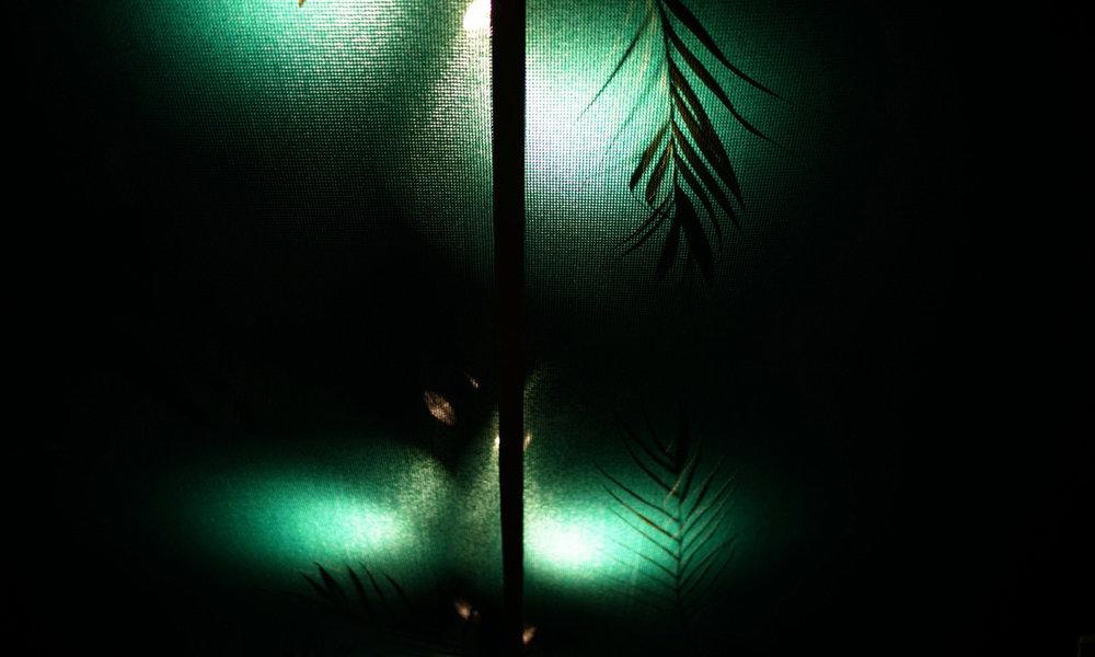 7_palm.jpg