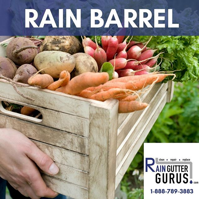 "Growing your own vegetables? #Savewater in a rain barrel installed by the Rain Gutter Gurus. Call 1-888-789-3883 to find out more or visit http://ow.ly/8qlC50kzzyi to read more about ""Why Gutters Matter."" #rainguttergurus #💧 #savewater #windowwashinggurus #5staryelp #luxuryhomes #homedecor #architecture #rainbarrel #realestate #coppergutters #seamlessgutters #licensedbondedinsured #luxuryrealestate #ecofriendly #rainwaterdiversion #protectyourproperty #rainbarrelinstallation #rainguttercleaning #raingutterrepair #raingutterinstallation #loansbysuzette #southerncalifornia #cleanlinessisnexttogodliness #befreelittlegutters #cleanyourgutters #savemoney #protectyourproperty"