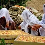 Women preparing apricots for drying in Ghorband