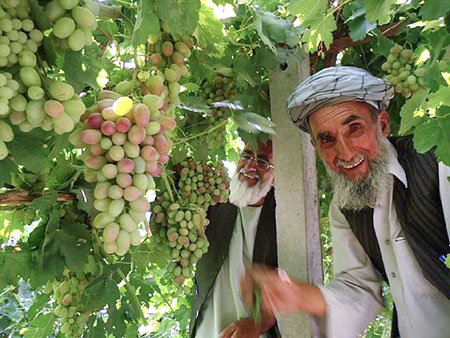 Afghan Grape Farmers