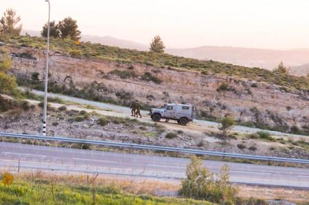 Minefield in Palestine