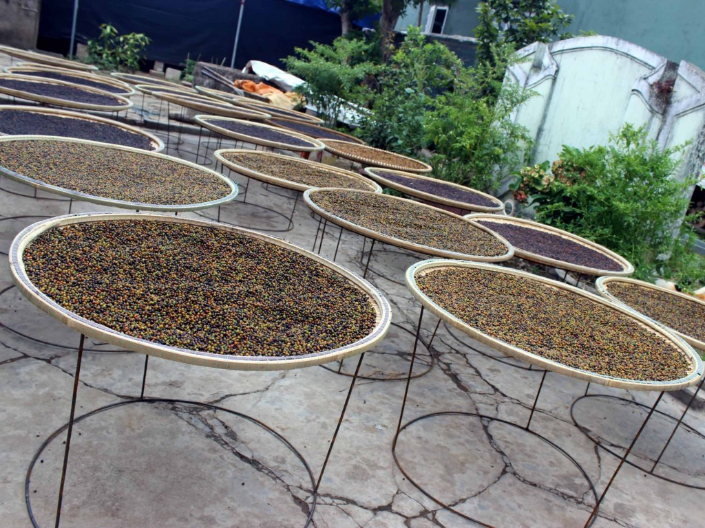 The flat bamboo baskets are raised above the ground level to avoid animal waste contamination