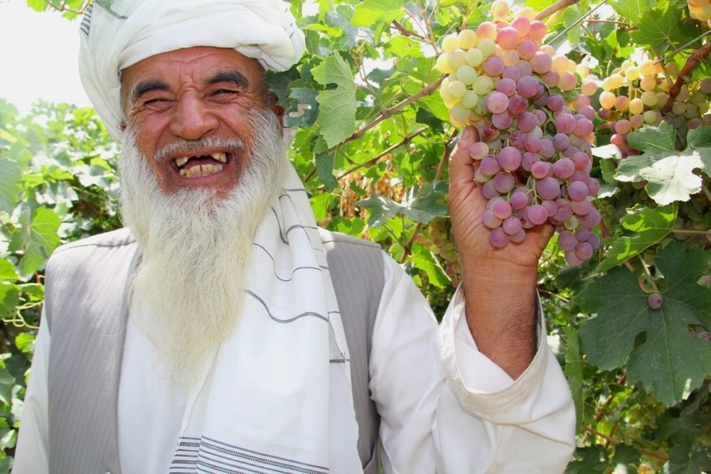 Roots-of-Peace-Afghanistan-Farmer-Grapes-Vineyard-Smile-ROP.jpg