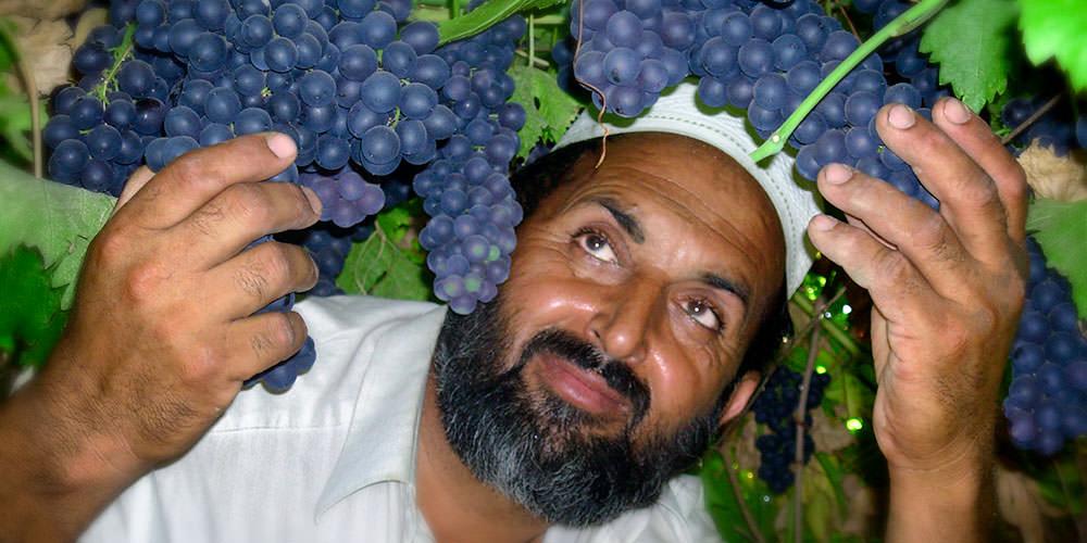 Rebuilt Afghanistan's Agriculture sector -