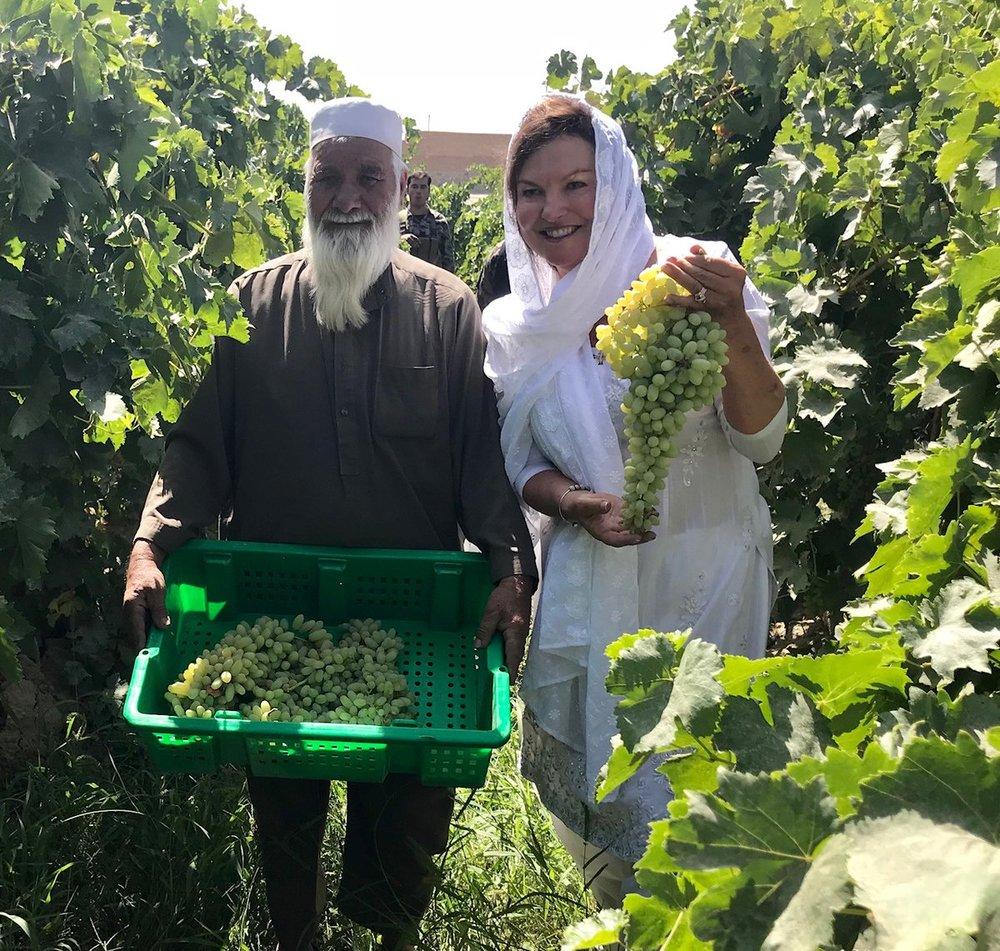 Heidi-Kuhn-Roots-of-Peace-Afghanistan-farmer-grapes-trellis-vineyards.jpg