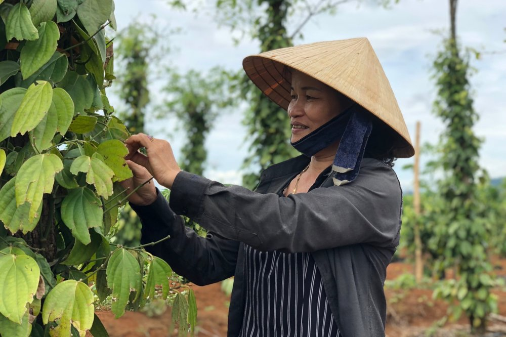 Roots-of-Peace-ROP-agriculture-farmer-Vietnam-woman-black-pepper-vine.jpg