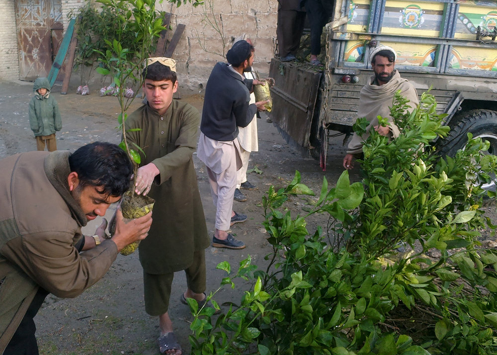 Roots-of-Peace-ROP-agriculture-Afghanistan-CHAMP-citrus-saplings-nursery-traders.jpg