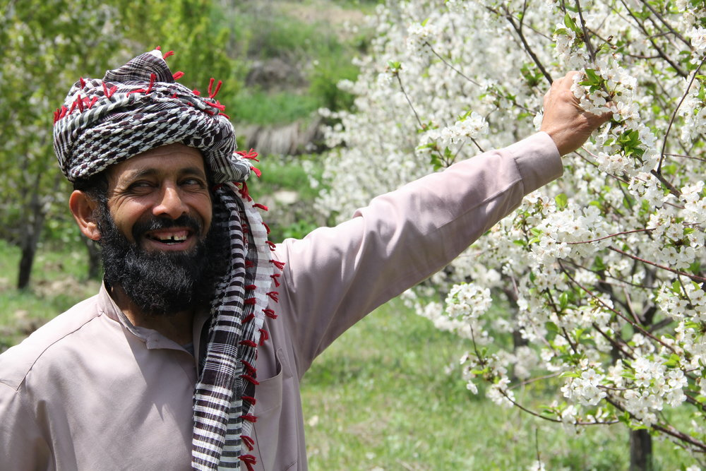Roots-of-Peace-ROP-agriculture-Afghanistan-farmer-smile-cherry-almond-orchard-tree.jpg