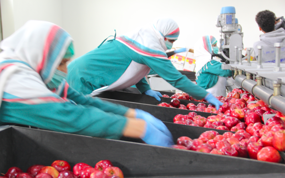 Roots-of-Peace-ROP-agriculture-Afghanistan-apple-processing-factory-facility-women-export.png