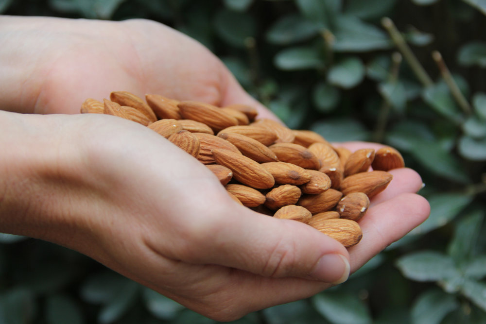 A handful of Afghan almonds.jpg