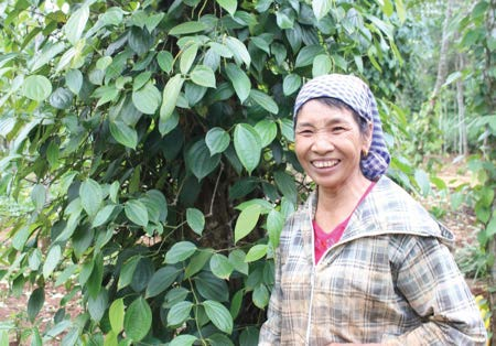 Her name is Nguyen Thi Minh – a single mother. She lives in Tan Duc Village, Vinh Hien Commune, Vinh Linh District, Quang Tri Province. The family situation is difficult, but she has successfully fulfilled the duties of a mother, a gentle wife, a good neighbor and a pioneer member of the pepper Club. Mrs. Minh accepted the difficulty of raising 4 children to study. When the family is less hard, the children grow up, she is still lonely.