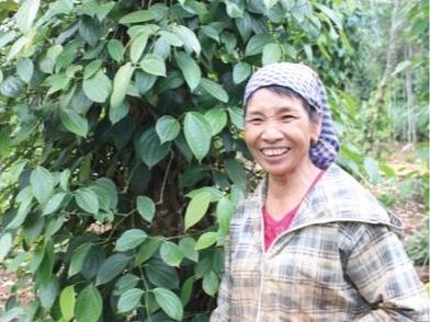 Roots-of-Peace-Farmer-black-pepper-Vietnam-ROP-vine.jpg