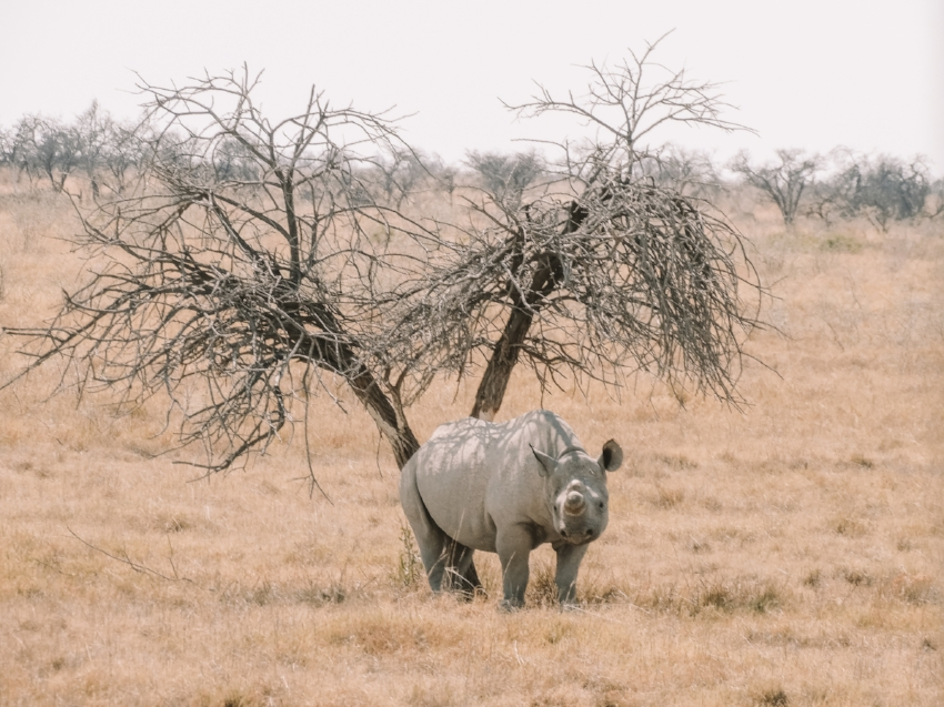 Rhino Walk - Optional Extra as part of the Tucan Southern African Tour