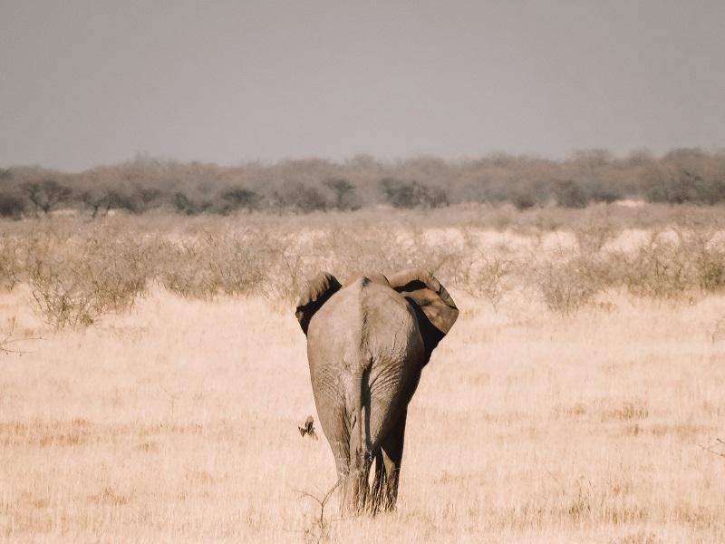 life-update-2018-elephant.jpg