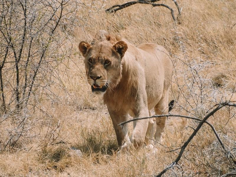 life-update-2018-lion.jpg