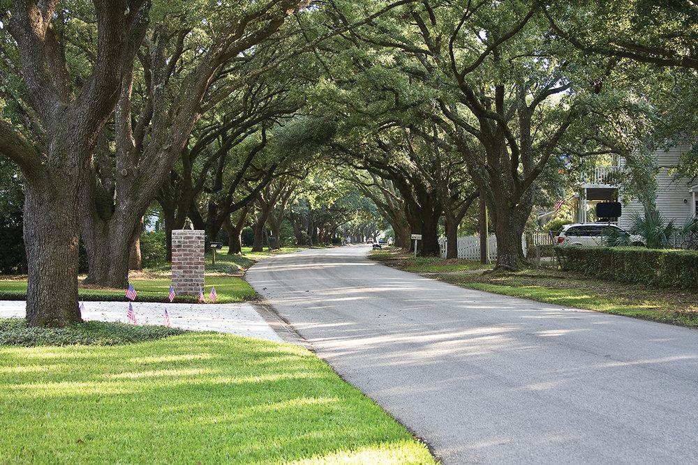Tree Lined Sept RGB 8x12.jpg