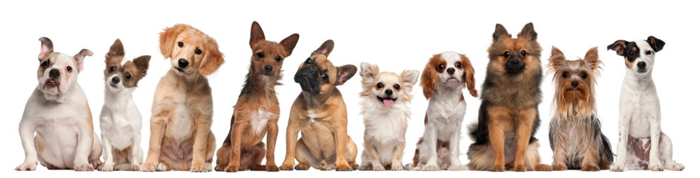 Group-of-dogs-sitting-against-white-background-000021142304_Large_7c0d4dfc-a514-48a2-b7bb-46fd975306a7.png