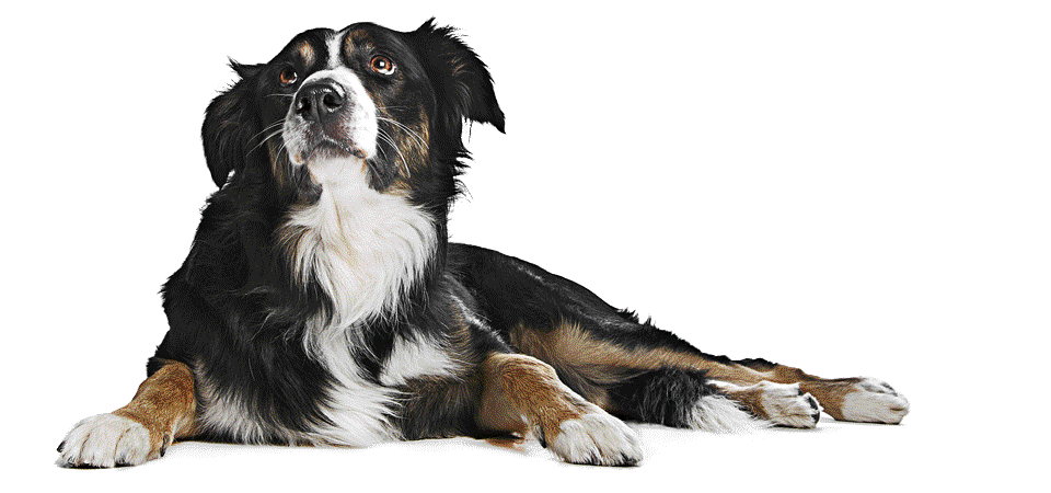 dog-chillin-3-49fe10ad5207c8baf207617de6bab7a1.png