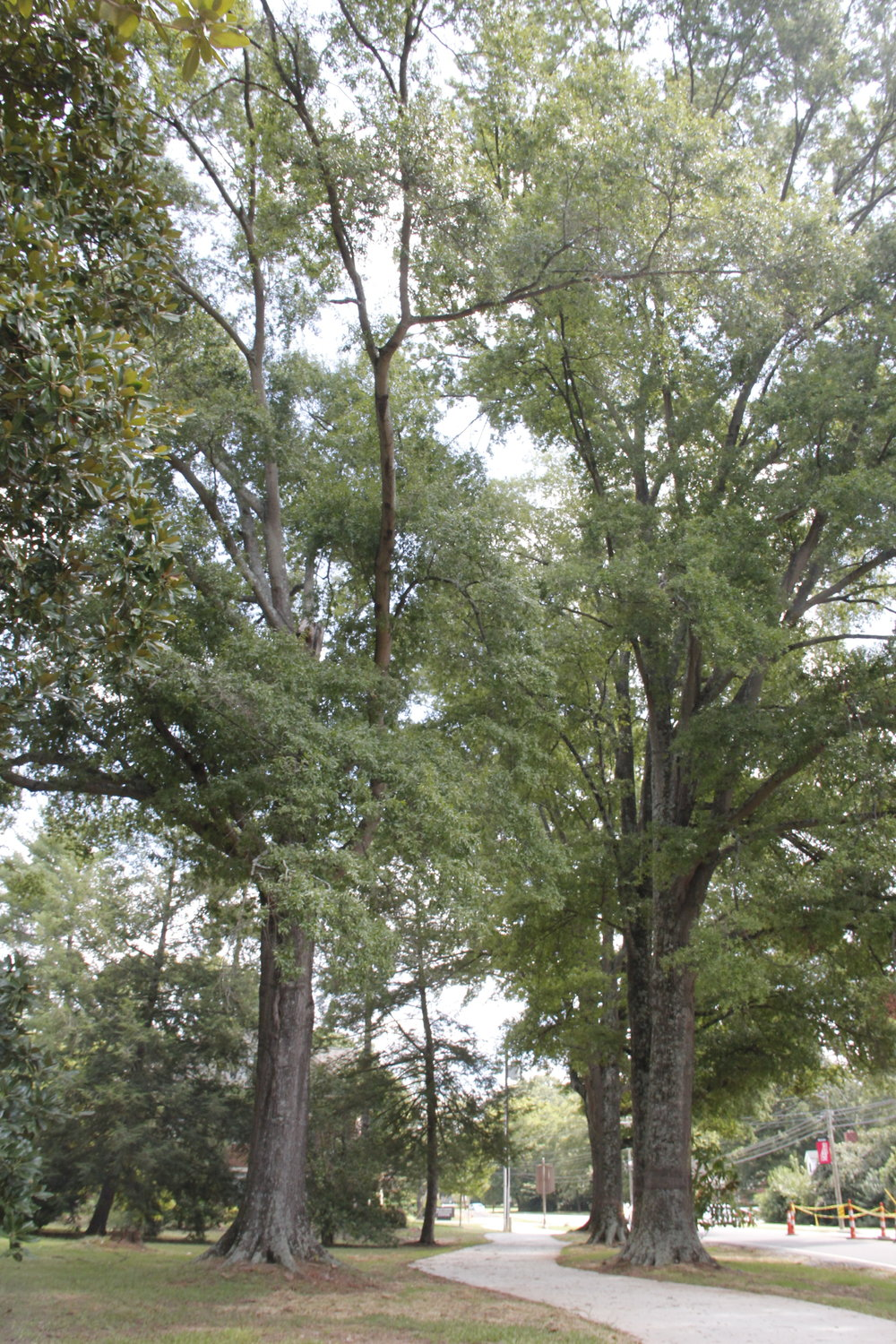 Large hardwoods are invaluable to Matthews' identity. The Appearance and Tree Board works to maintain our tree canopy.