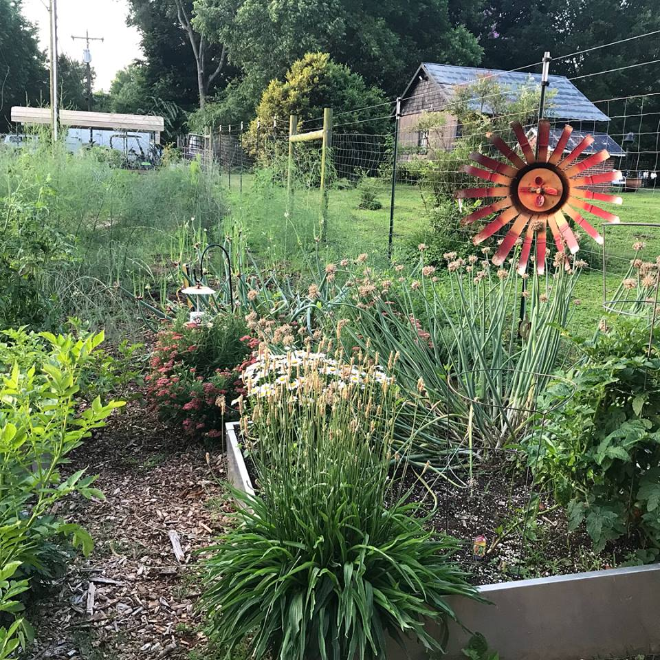 Photo courtesy  Jeff's Successful Gardener Facebook Page .