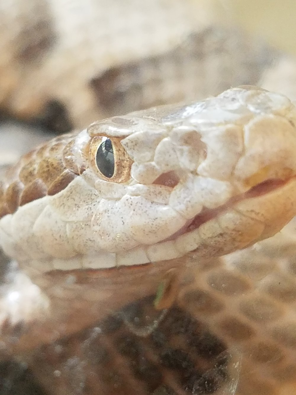 Photo by    Jay Bell, Reptiles 101
