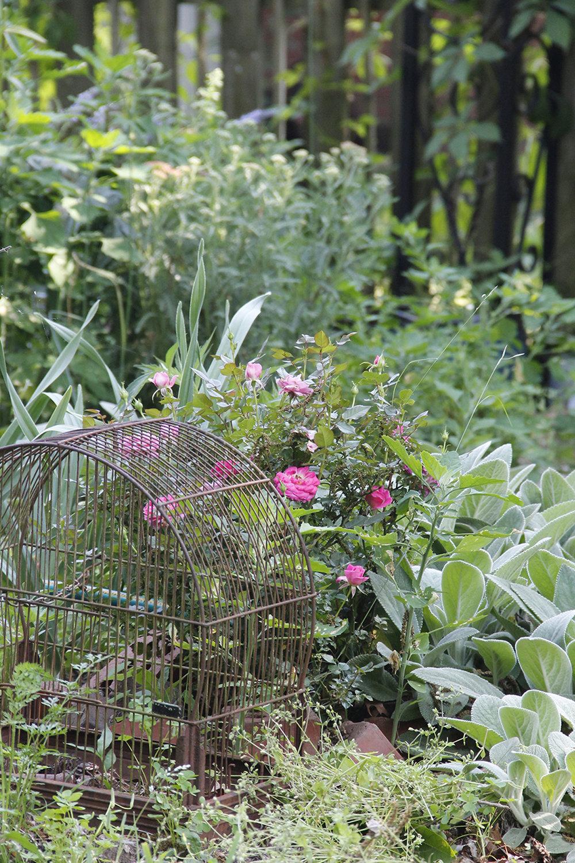 read a garden.jpg