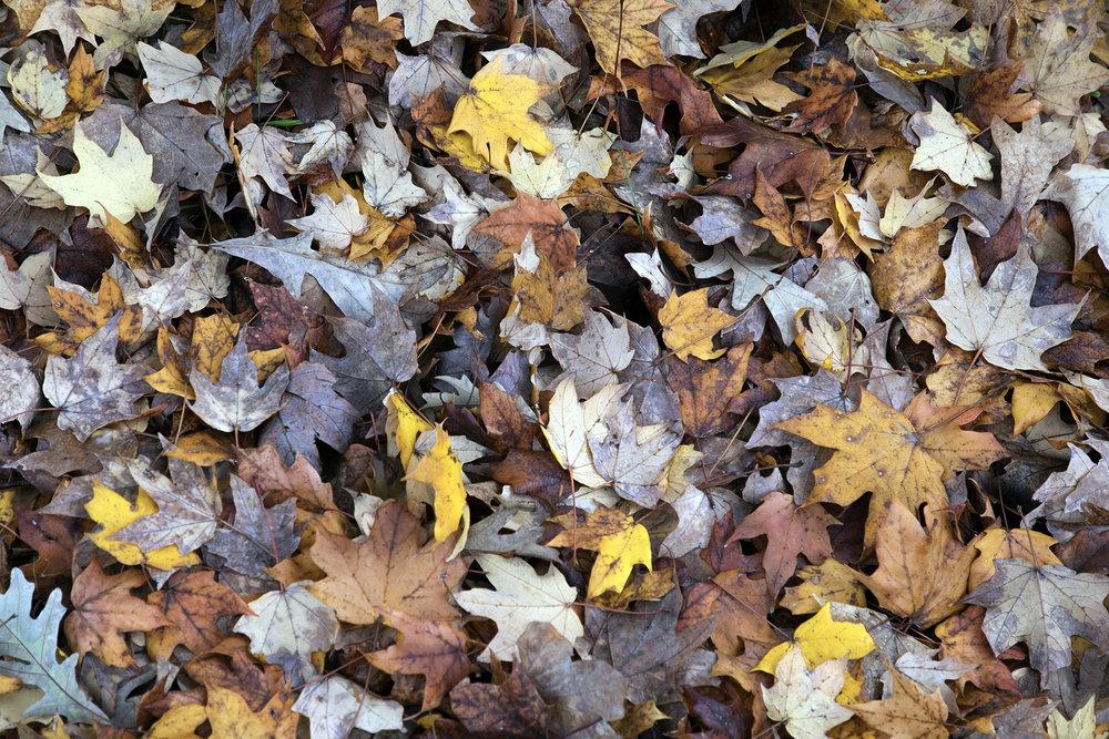 new leaf 2.jpg