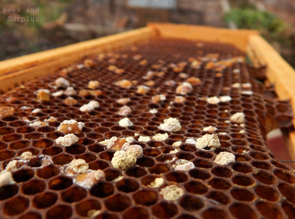 Mark your calendar for the next HAWK meeting, Tuesday, February 5. Kim O'Shea, beekeeper, archaeologist and master gardener will change the way you see bees. Her own videos and photos provide a unique glimpse into the way bees interact with their surroundings. Kim will explain methods for gardening for and with bees through year-round sustainable practices. 7 p.m. at the Community Center. - Photo by Kim O'Shea