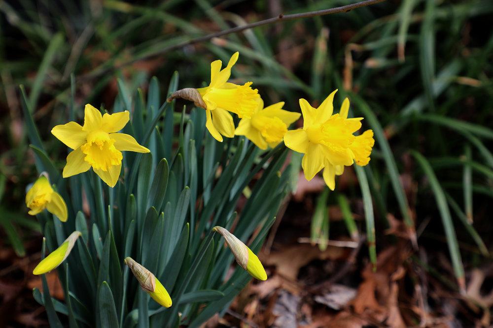 spring flowers 1.jpg