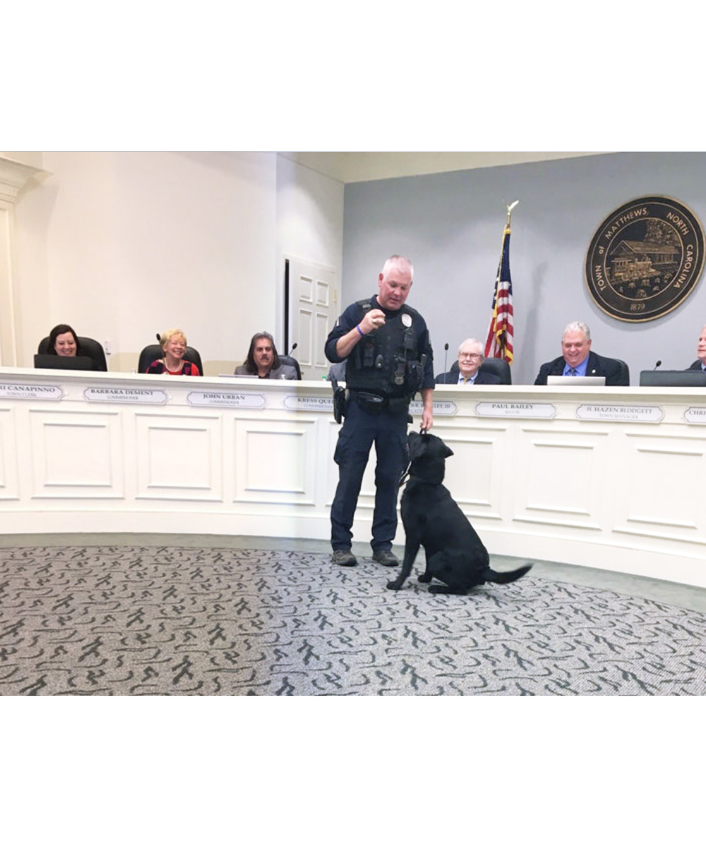 News About Town: There was no reason to doubt the Board would approve the addition of a new K9 to the Police Department, but we're here to make sure you're left with zero doubt whatsoever. With approval byt the Board of Commissioners, Matthews PD officially welcomes Benny, a 15-month old black lab. He is a single-purpose pup (sniffing out illegal drugs), passed his certification, and has been in action with 2 arrests under his belt! -