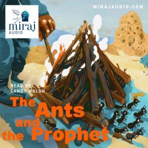 ants_0