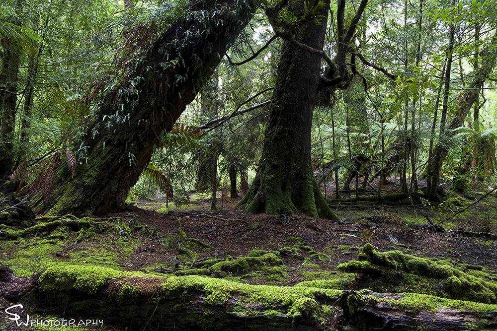 Trowutta Forest