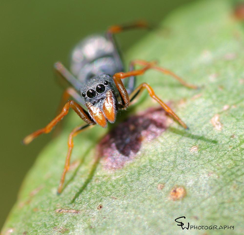 spiderantfb.jpg