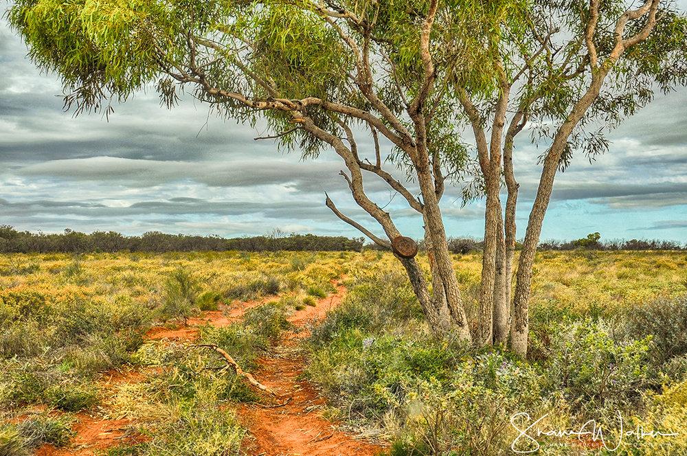 outbacktreefb.jpg