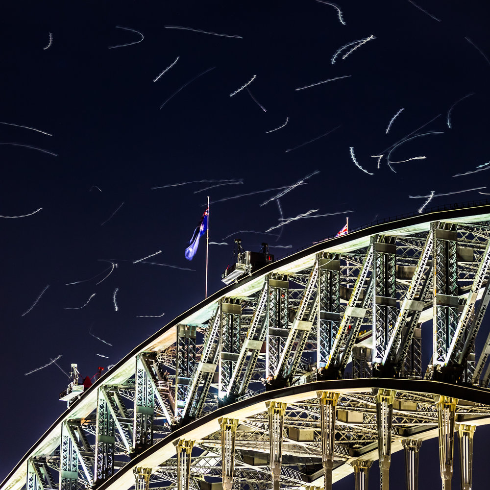 Silver Gulls catch insects in the lights of the Sydney Harbour Bridge.