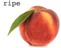 ripe.png
